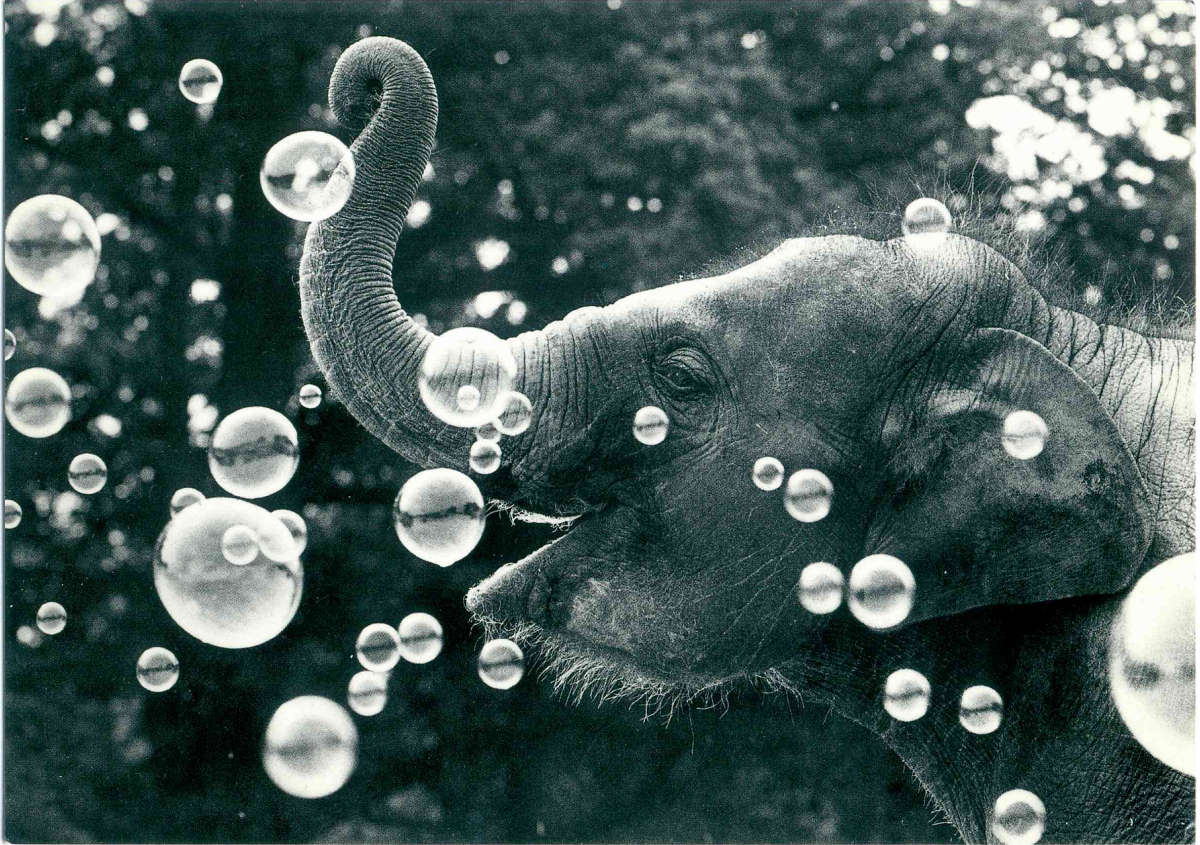 Elephant playing with bubbles